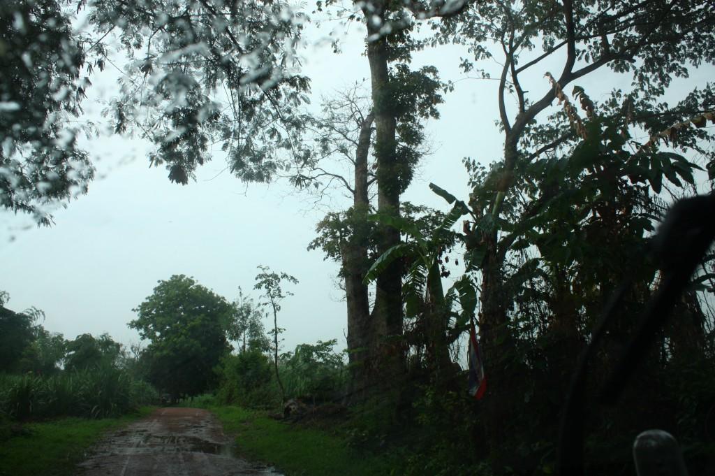 ต้นแหนใหญ่ที่อยู่คู่กับเมืองโบราณแห่งนี้มากว่า 440 ปี ซึ่งตั้งตระหง่านท้าดินฟ้าอากาศ จนเมื่อกลางฤดูฝนที่ผ่านมาได้ถูกฟ้าผ่าลงจึงเห็นดังรูป